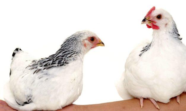 "Gluten Causes Keratosis Pilaris(a.k.a. ""chicken skin""): Fact or Myth?"