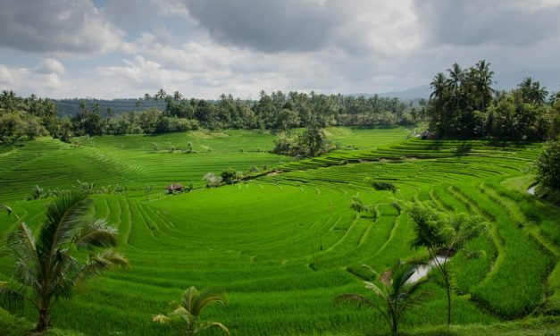 Statement on Arsenic in Rice